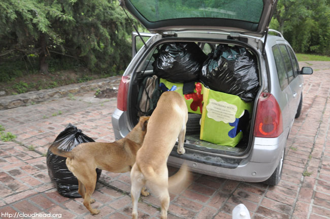 dogs, donations, ready to go, ready to donate, wichi/h20